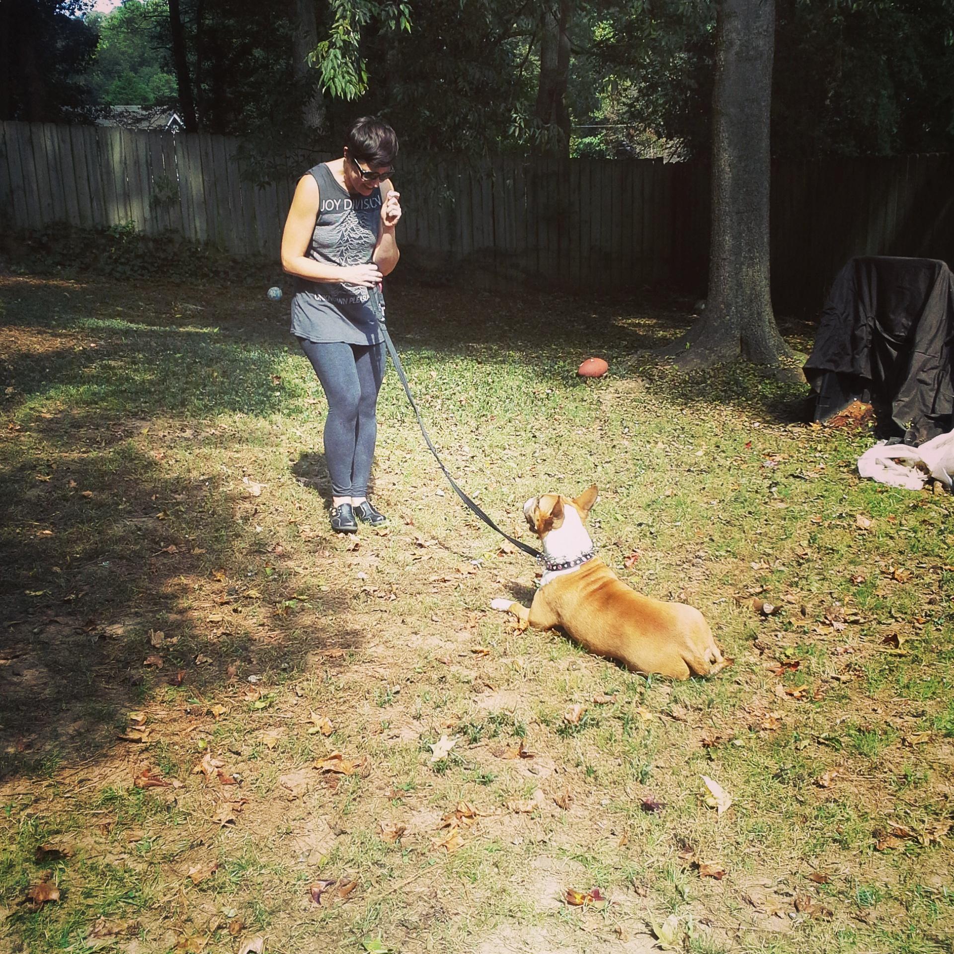 Dog Trainer Richmond On