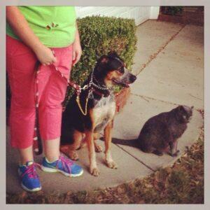 Richmond Dog Trainer Blog!
