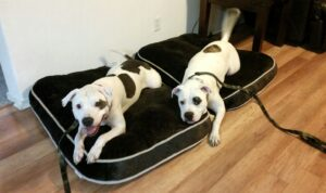 Richmond dog training programs can help your rescue dog become a well behaved member of the family!