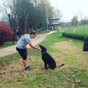 Our Richmond dog training programs train both dogs and their owners.