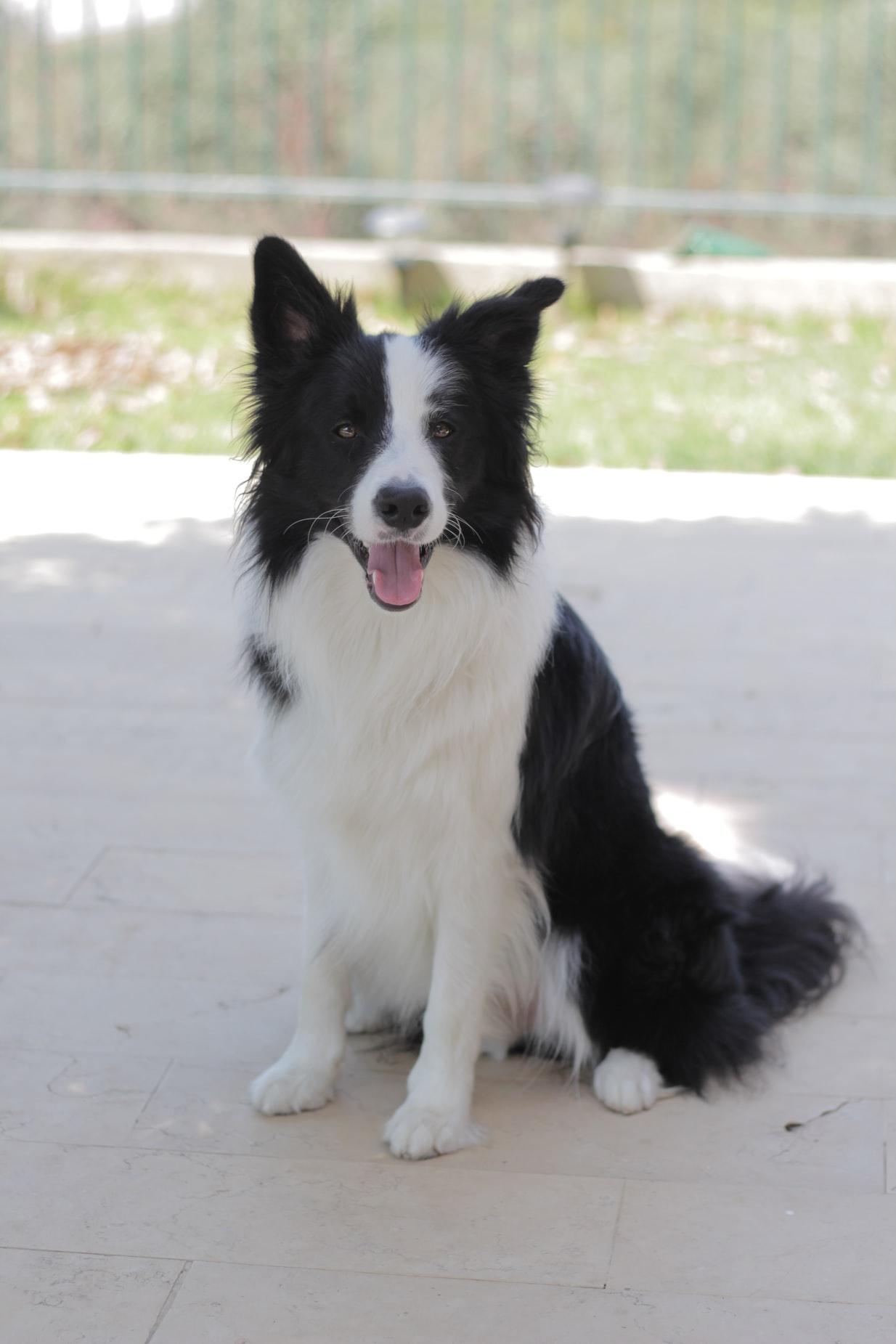 dog training in Charlottesville